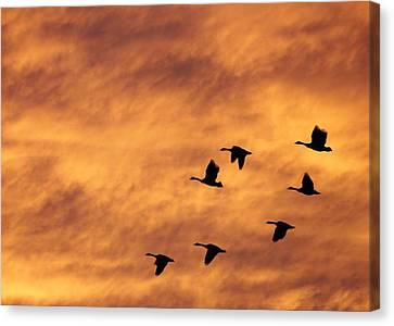 Sunrise Flight 2 Canvas Print