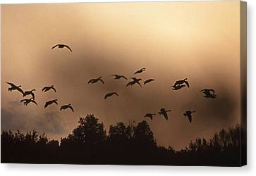 Sunrise Fog And Incoming Canvas Print by Skip Willits