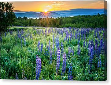 Sunrise From Sampler Fields - Sugar Hill New Hampshire Canvas Print by Thomas Schoeller