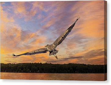 Tracy Munson Canvas Print - Sunrise Heron by Tracy Munson