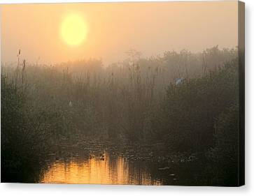 Sunrise In The Everglades Canvas Print by Rudy Umans
