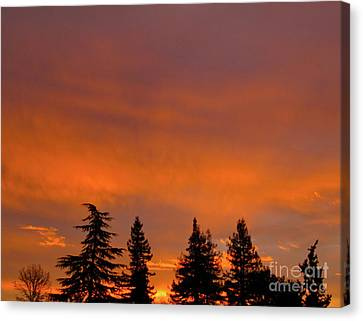Sunrise In The Morning Canvas Print by CML Brown