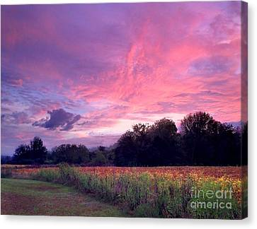 Reflection Harvest Canvas Print - Sunrise In The South by T Lowry Wilson