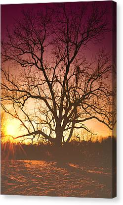 Sunrise Canvas Print by Kelly Reber