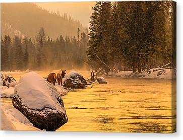 Canvas Print featuring the photograph Sunrise On Madison River by Yeates Photography