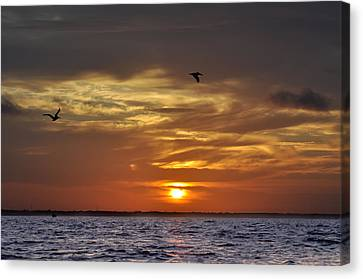 Sunrise On Tampa Bay Canvas Print by Bill Cannon