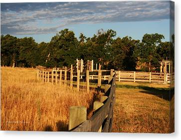 Sunrise On The Fence Canvas Print