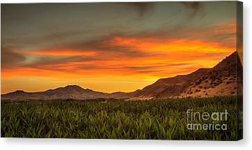 Sunrise Over A Corn Field Canvas Print by Robert Bales