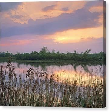 Sunrise Over Hillman Marsh Ontario Canvas Print by Tim Fitzharris