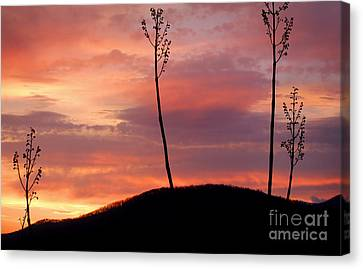 Sunrise Over The Great Smoky Mountains Canvas Print by Glenn Morimoto