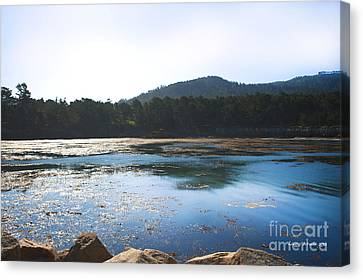 Sunrise Over Whaler's Cove At Point Lobos California Canvas Print by Artist and Photographer Laura Wrede