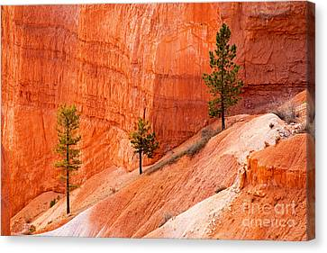 Sunrise Point Bryce Canyon National Park Canvas Print