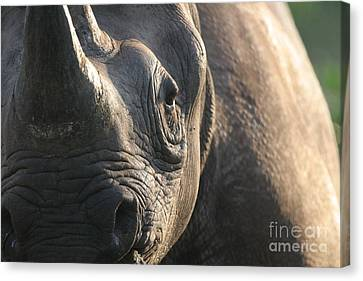 Sunrise Rhino Canvas Print