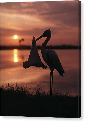 Stork Canvas Print - Sunrise Silhouette Of Stork Carrying by Vintage Images