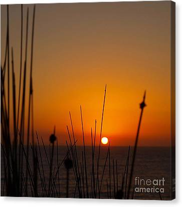 Canvas Print featuring the photograph Sunrise Silhouette by Trena Mara