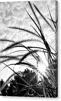 Canvas Print featuring the photograph Sunrise Sunburst by Kelly Nowak