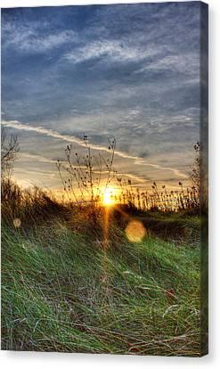 Sunrise Through Grass Canvas Print by Tim Buisman