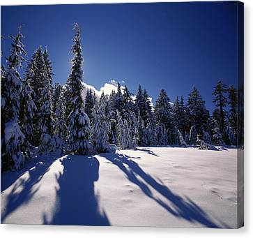 Sunrise Through Snow Covered Fir Trees Canvas Print by Panoramic Images