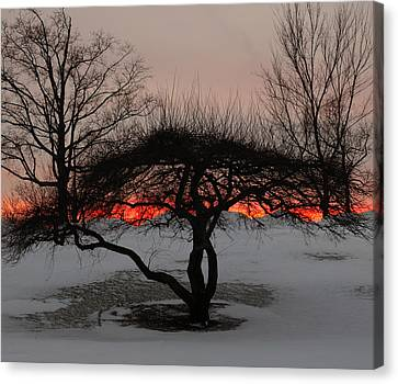 Snowy Night Night Canvas Print - Sunroof by Luke Moore