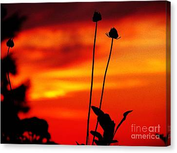 Sunset 365 20 Canvas Print by Tina M Wenger