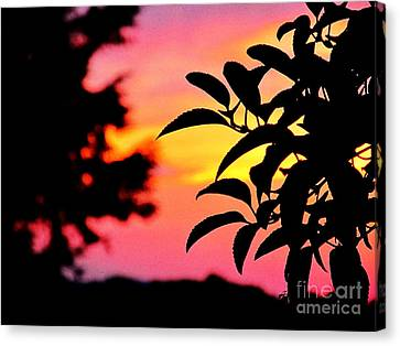 Sunset 365 61 Canvas Print by Tina M Wenger