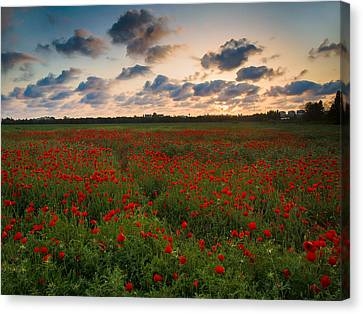 Canvas Print featuring the photograph Sunset And Poppies by Meir Ezrachi