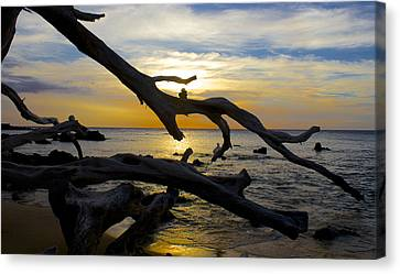 Driftwood At Sunset On Beach '69 Canvas Print by Venetia Featherstone-Witty
