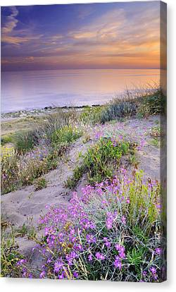 Sunset At The Beach  Flowers On The Sand Canvas Print by Guido Montanes Castillo