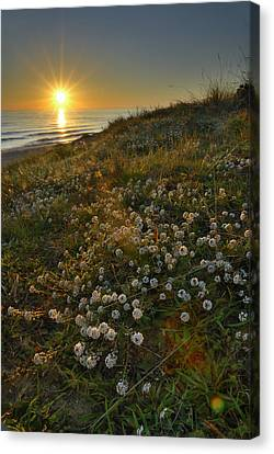 Sunset At The Beach  White Flowers On The Sand Canvas Print by Guido Montanes Castillo