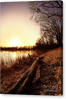 Sunset At The Lake Canvas Print by Daniel Heine