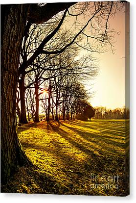 Sunset At The Park Canvas Print by Daniel Heine