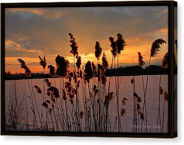Canvas Print featuring the photograph Sunset At The Pond 3 by Michaela Preston