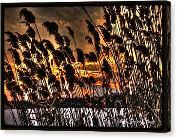 Canvas Print featuring the photograph Sunset At The Pond 5 by Michaela Preston