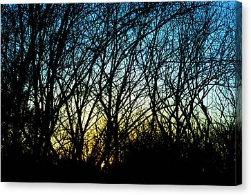 Sunset Behind Trees Canvas Print