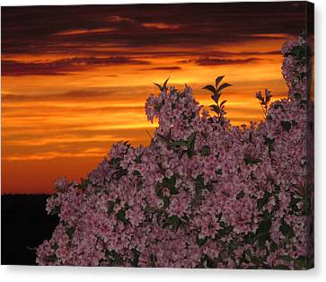 Sunset Blooms Canvas Print by Donnie Freeman