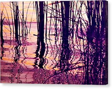 Sunset Cattails Canvas Print