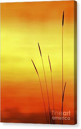 Canvas Print featuring the photograph Sunset by Christopher Mace