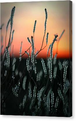 Sunset Desert Canvas Print