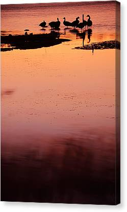 Flock Of Geese Canvas Print - Sunset Discourse- Gorton Pond Warwick Rhode Island by Lourry Legarde
