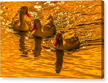 Sunset Ducks Canvas Print by Brian Stevens