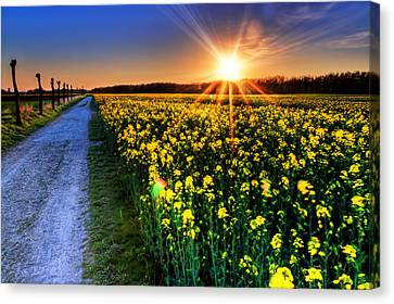 Glow Canvas Print - Sunset Field by EXparte SE