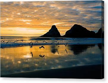 Sunset Flight Canvas Print by Bonnie Bruno
