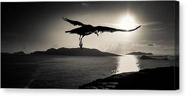 Sunset Flight Canvas Print by Florian Walsh