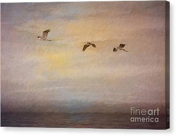 Sunset Flight Canvas Print by Jayne Carney