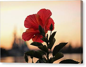 Canvas Print featuring the photograph Sunset Flower by Cynthia Guinn