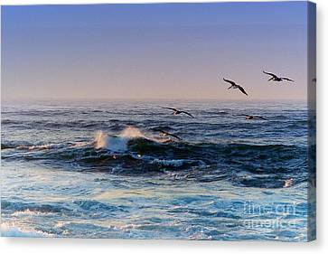 Sunset Fly Canvas Print by Kathy Bassett