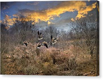 Flock Of Geese Canvas Print - Sunset Geese by Christina Rollo