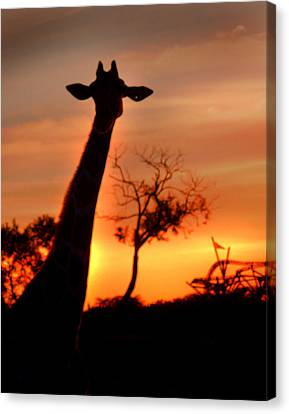 Sunset Giraffe Canvas Print by Joseph G Holland