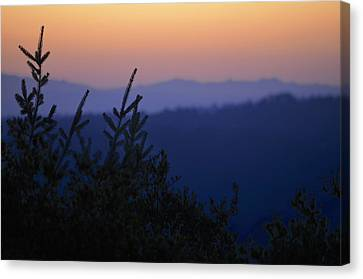 Sunset In California Canvas Print by Alex King
