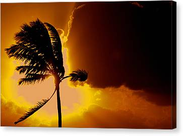 Sunset In Long Island Canvas Print by Victor Minca